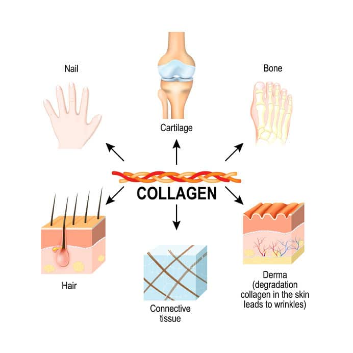 Collagen for Healthy Aging